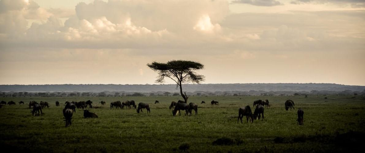 sanctuary-kichakani-serengeti-camp-tanzania-safari-great-migration