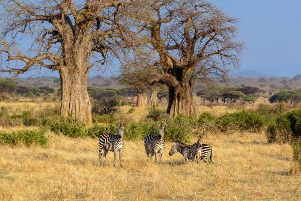 1-ruaha-tanzania-4