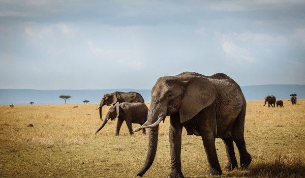 1-serengeti-national-park-tanzania-elephant