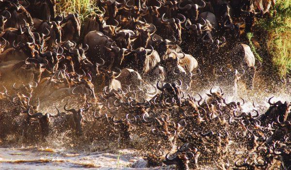1-serengeti-national-park-tanzania-migration