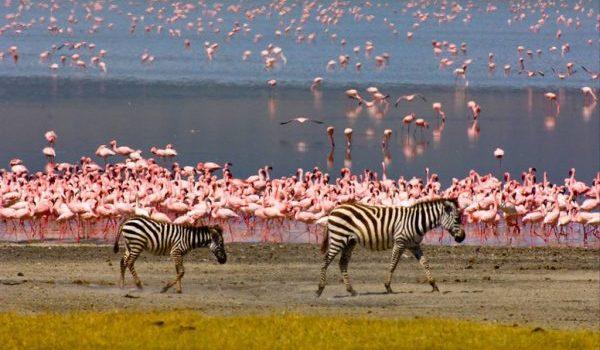 4 days Lake Manyara