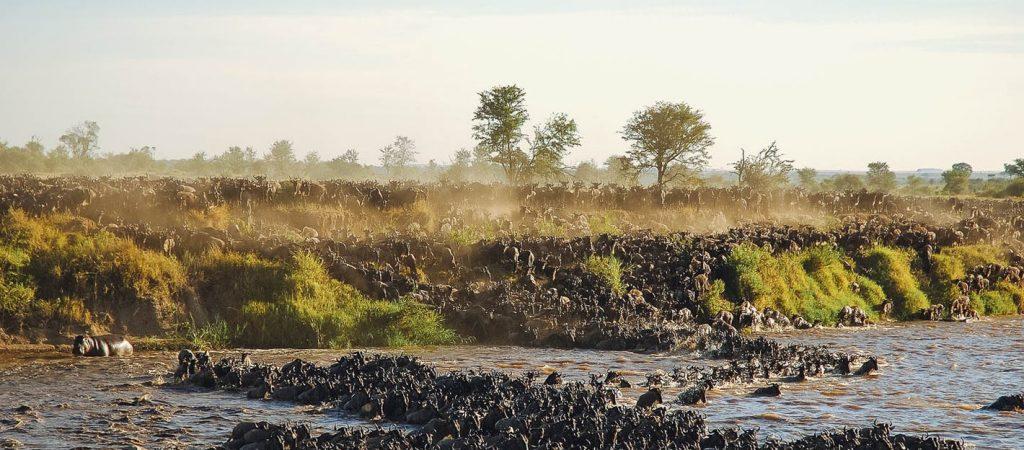 Great-Migration-Wildebeest-Crossing-Mara-River