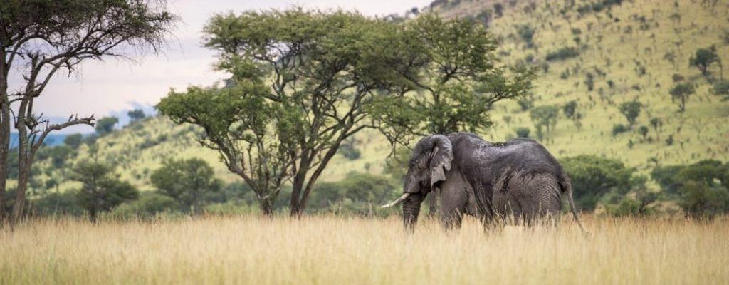 Grumeti-Wildlife-9-of-481 (2)