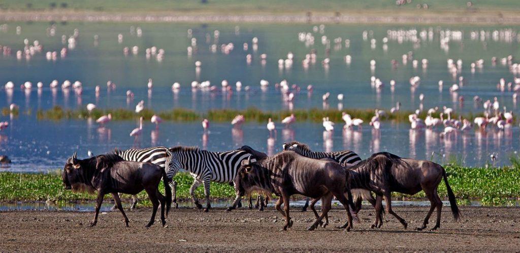 Lake-Manyara-Wildebeest-Zebra-Flamingos-Lake-Safari