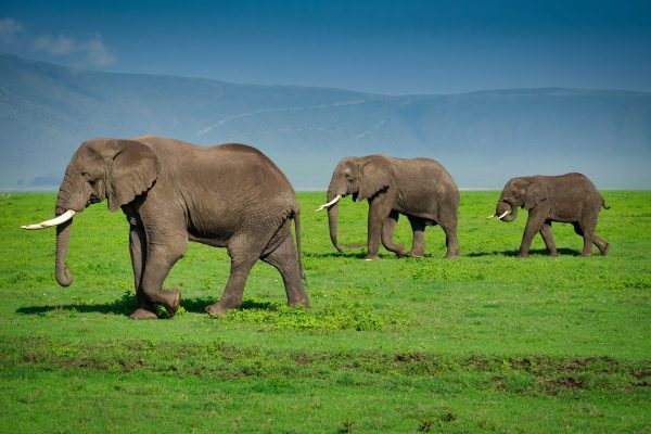Ngorongoro-Crater-Safari3-scaled