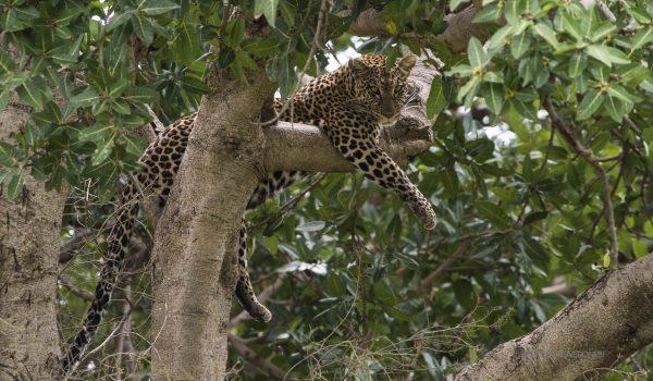 Serengeti_Tanzania-kopjes_Photo_Safari_3