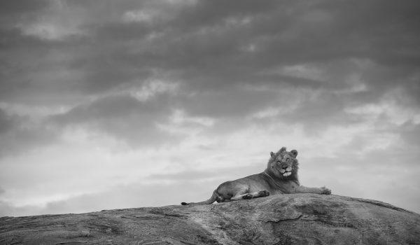 Serengeti_Tanzania_Migration8