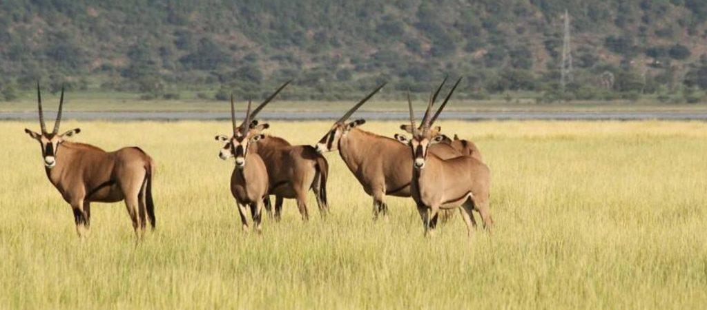 Tarangire-National-Park-Ngorongoro-Crater-1