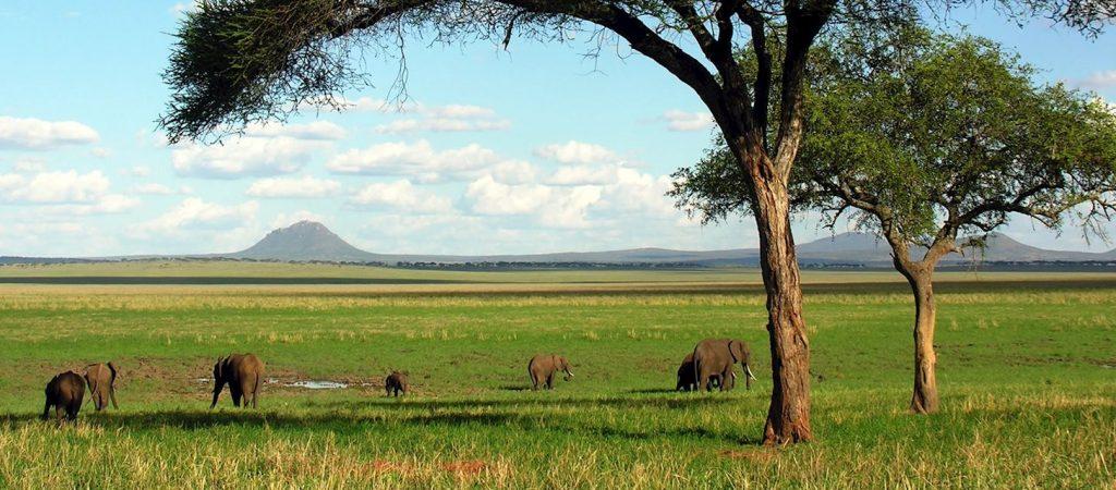 Tarangire elephant swamp