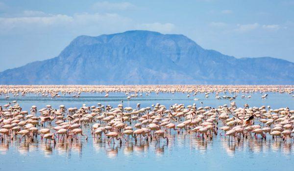 flamingoes-lake-natron-tanzania