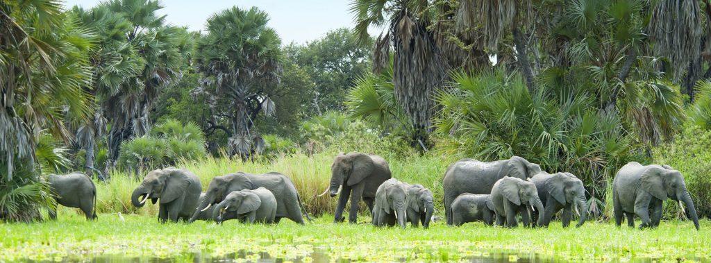 herd-of-elephants-and-water-selous-1920x1080